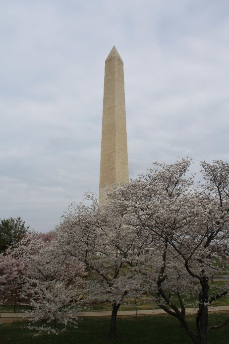 Memoirs_of_DC_Epilepsy_Walk_BLOG